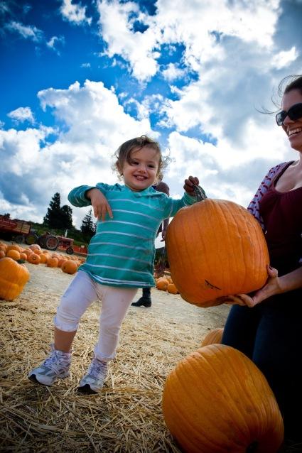 pumpkin patch underwood family farms