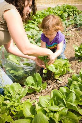 toddler at farm