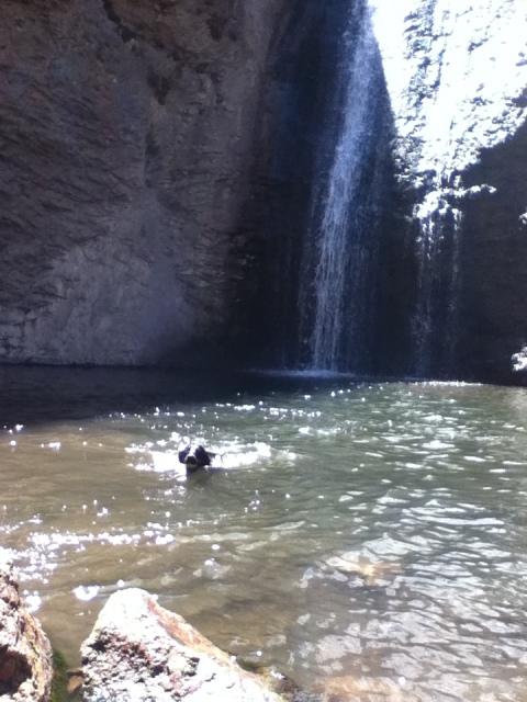 dog swimming in waterfall