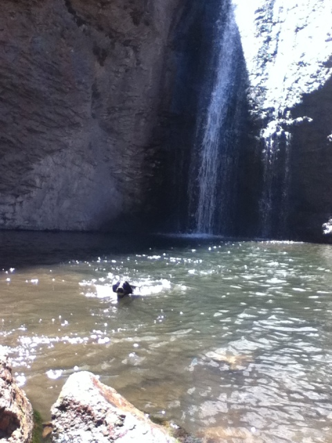 dog swimming in waterfall