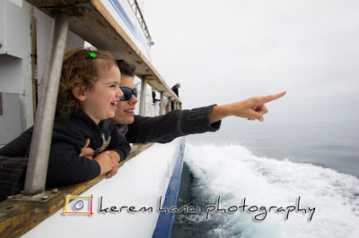 whale watching cruise channel islands