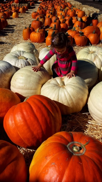 Underwood Farms Pumpkin Patch