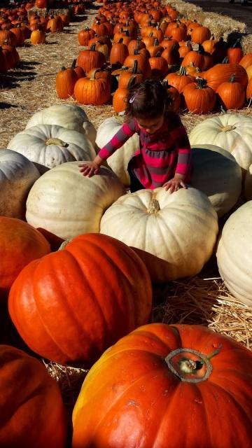 Underwood Farms Pumpkin Patch