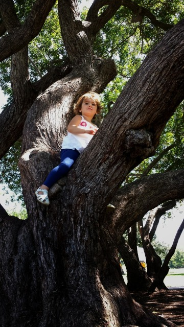 Toddler Climbing a Tree