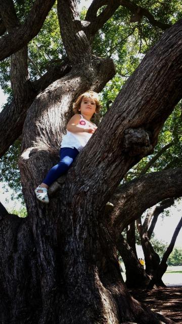 Toddler Climbing a Tree