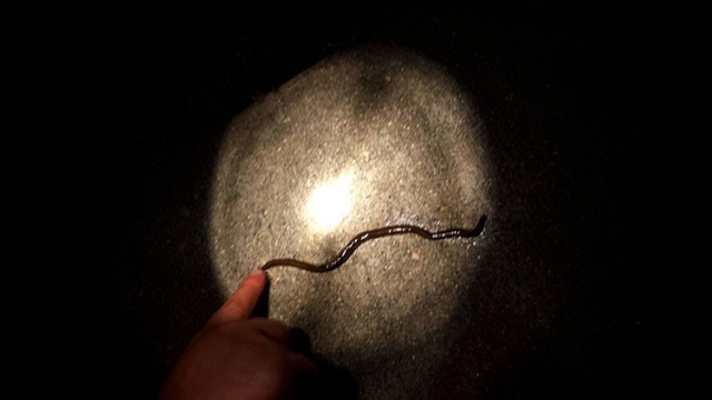 Exploring Nighttime Creepy Crawlers with Kids