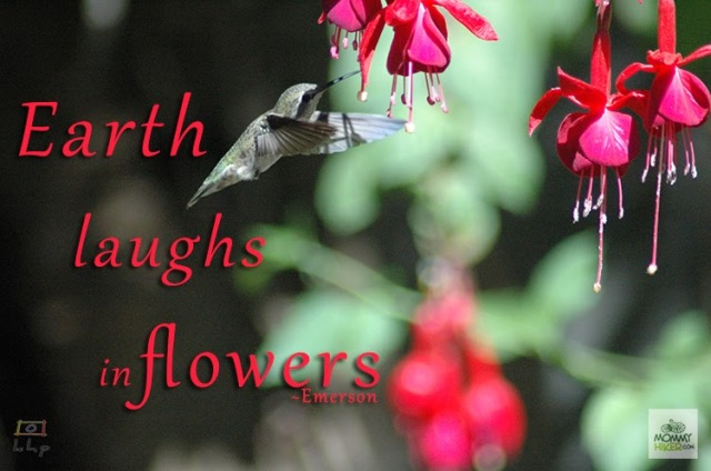 Earth laughs in flowers. Ralph Waldo Emerson