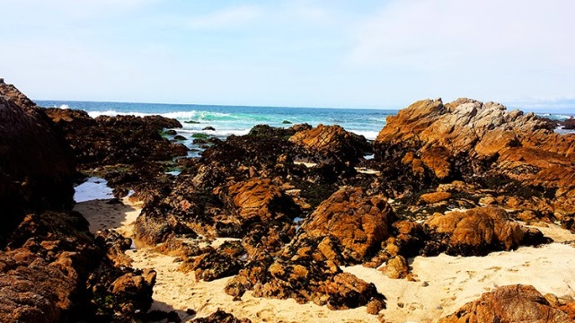 Tide Pools at Asilomar State Beach - Monterey, California