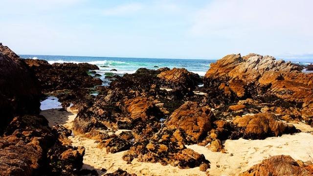 Tide Pools at Asilomar State Beach - Monterey, California