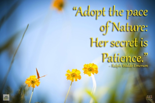 Inspirational Nature Quote - Ralph Waldo Emerson