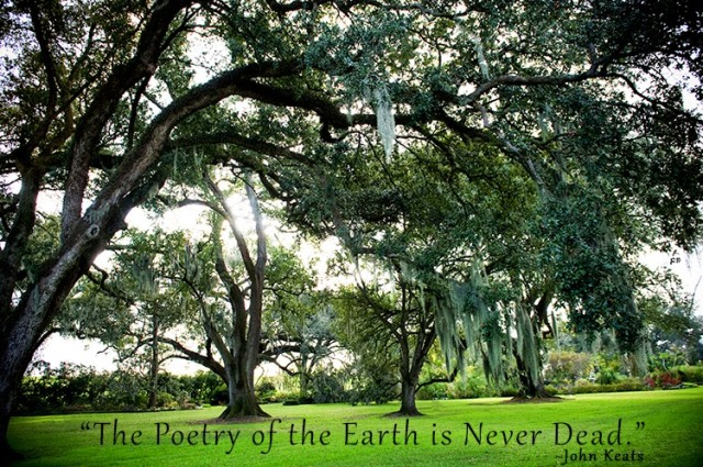 Inspiration Nature Quote - John Keats